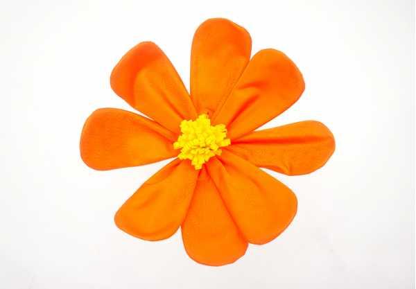 コスモス オレンジ
